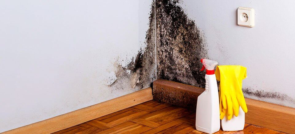 Як позбутися від грибка на стінах в будинку?