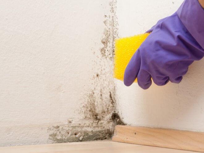 Как избавиться от грибка на стенах в доме?