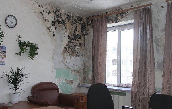 Грибок на стенах в квартире: в чём опасность?