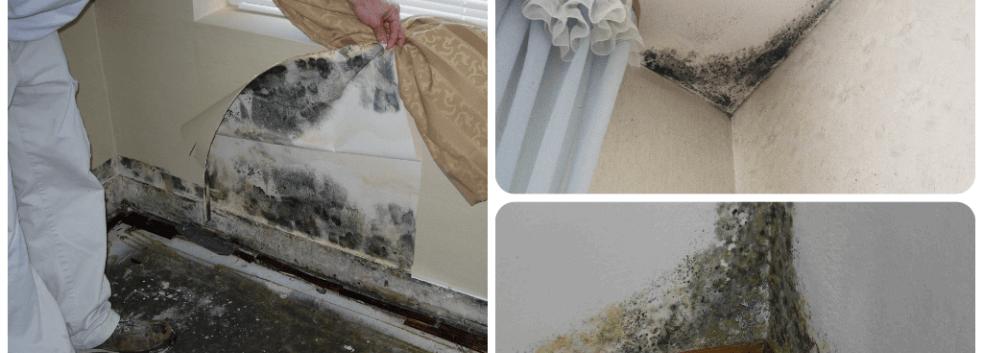 Как убрать плесень (грибок) со стен