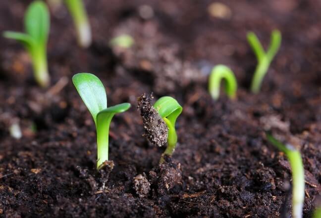 Как анализ почвы и растений поможет управлять урожайностью