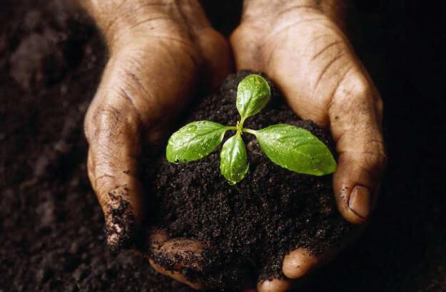 Анализ почвы основные показатели, расшифровка