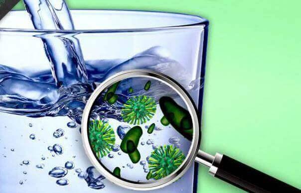 Какие вирусы и бактерии содержатся в воде?