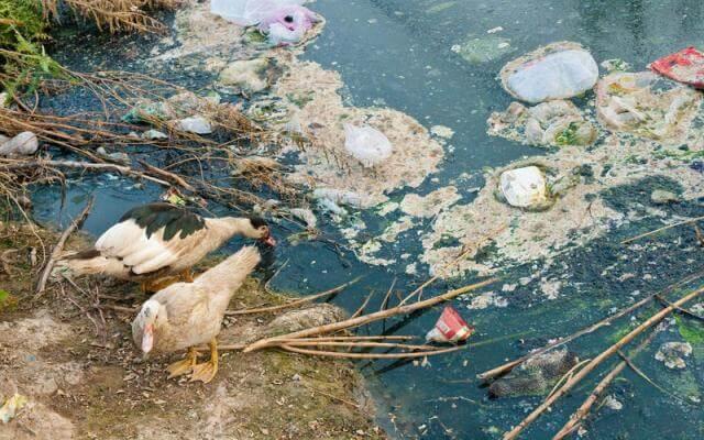 Загрязнение воды органическими веществами