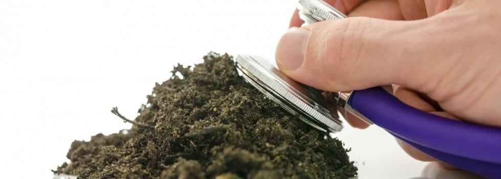 Як визначити кислотність ґрунту